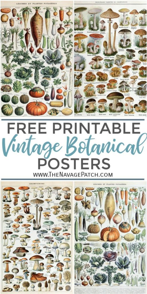 Free Printable Vintage Botanical Prints TheNavagePatch.com  if you don't have a large format printer like Canon i8720 Printer (prints up to 13×19 inches) and are wondering the best place to get these printables printed bigger than 8×12, we recommend trying Staples in your area or Amazon print shop. Both stores offer custom-sized prints on matte or glossy paper and they both cost about the same. Staples also offers Engineering Prints, which are really affordable for large-format prints, but in so