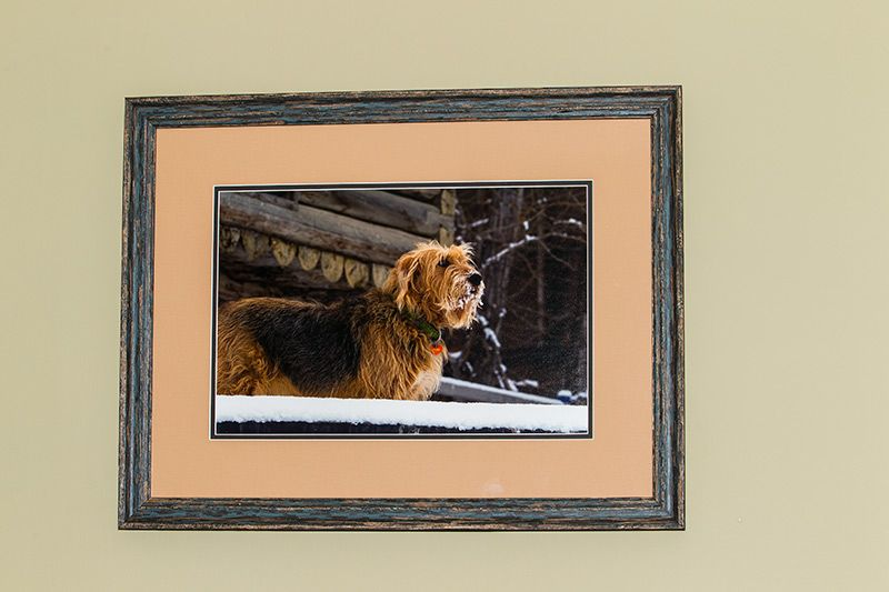 New blog entry: Premier Pet Set http://tanyadeleeuwphotography.blogspot.ca/2014/03/premier-pet-set.html