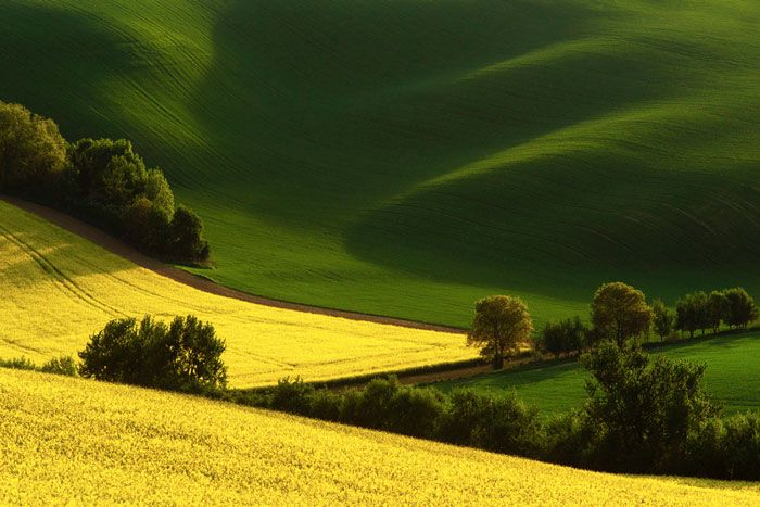 South Moravia Windows XP Wallpaper Like Sceneries CAT IN WATER - The mesmerising beauty of moravian fields photographed by marcin sobas