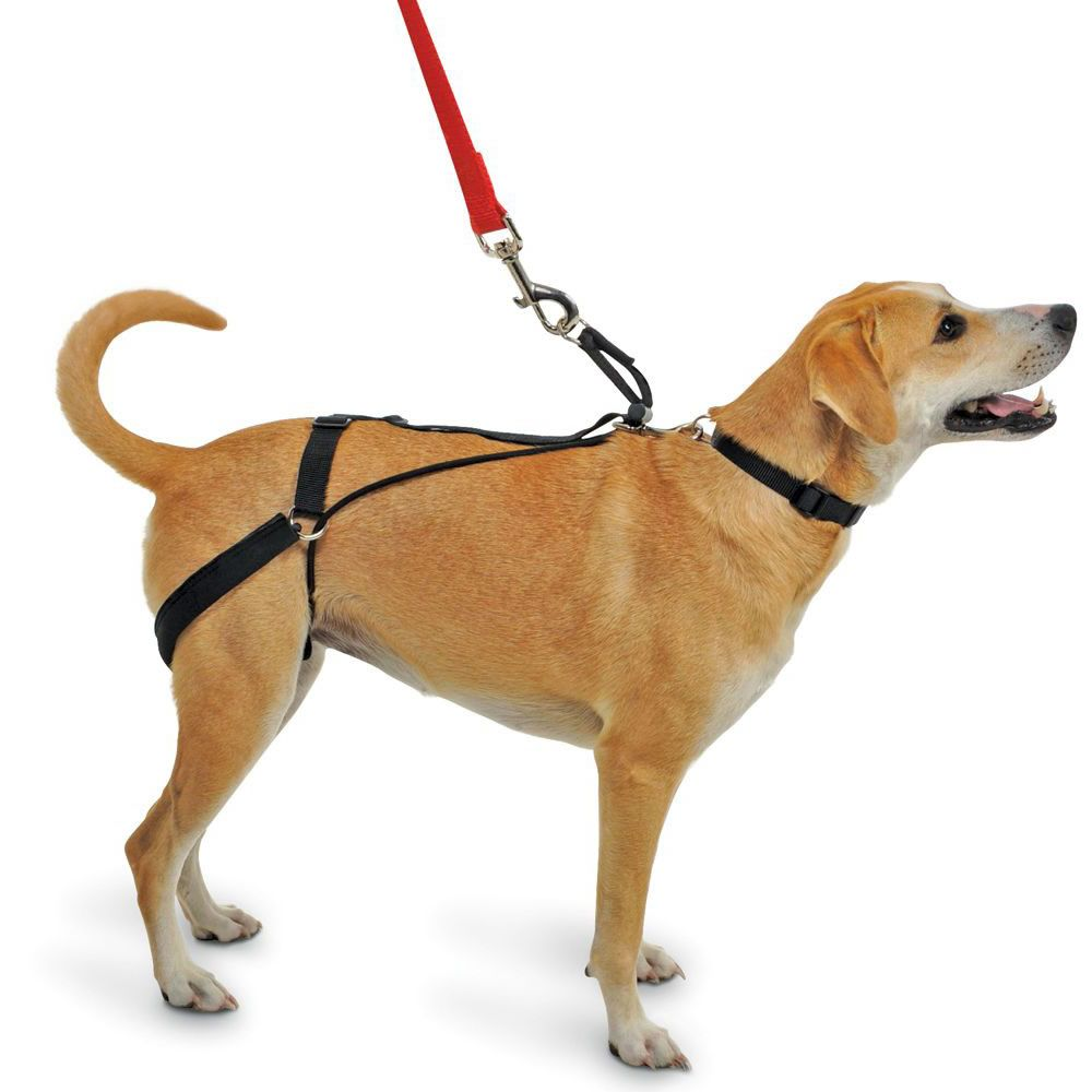 The Canine Tug Preventing Harness Hammacher Schlemmer