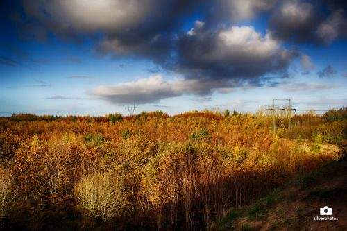 superbnature:  End of Fall by Silveer