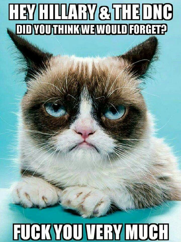 Pin By Taylor Kannaby On Busted A People S Revolution Grumpy Cat Grumpy Cat Humor Funny Wishes
