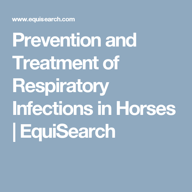 Prevention and Treatment of Respiratory Infections in Horses   EquiSearch