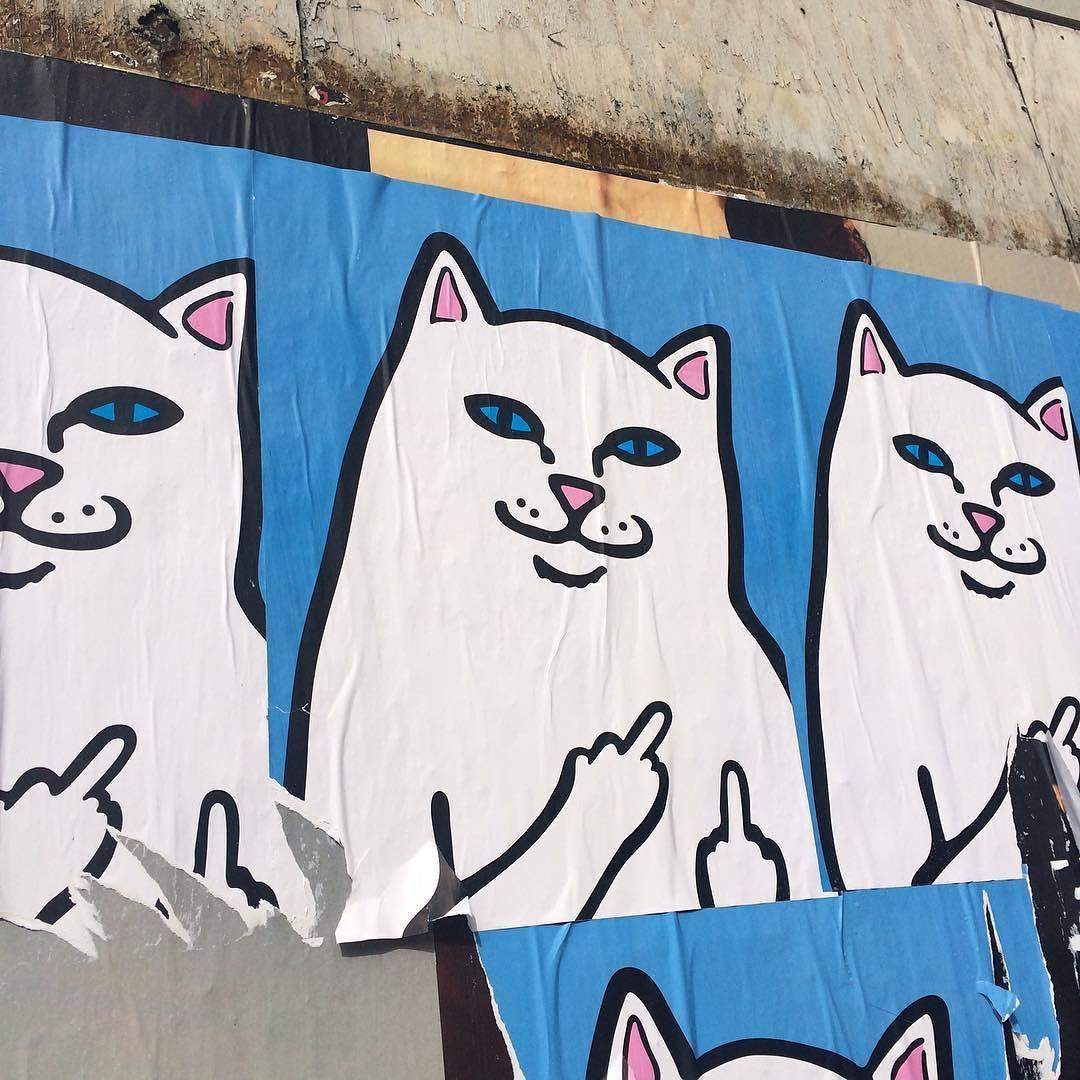 Street cat. #dtla #losangeles #downtownlosangeles #la #downtownla #california #streetart #cat #catart #cats by jennylator