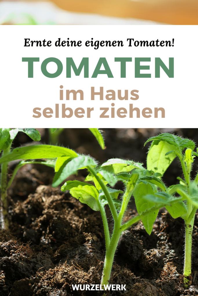 Super Vitale Tomaten Vorziehen Tomaten Anzucht Im Haus Tomaten Garten Gemuse Anpflanzen Und Tomatenanbau