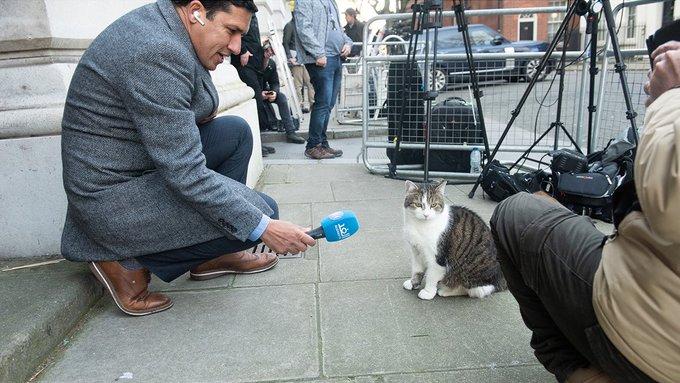 Larry The Cat Number10cat Twitter In 2020 Larry Cats Cat S