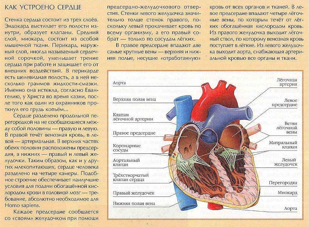 076 Anatomy Internal Organs