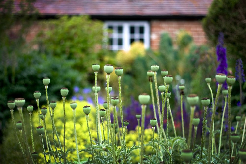 Garden Design | Nicholsons Garden Design | Garden ...