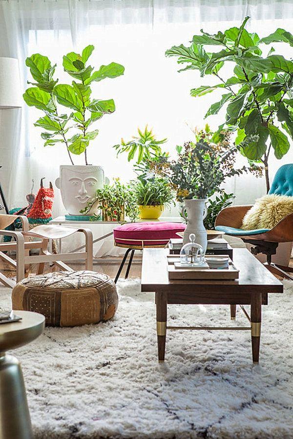pflegeleichte groß laub Schöne Zimmerpflanzen topfpflanzen - schone grose wohnzimmer