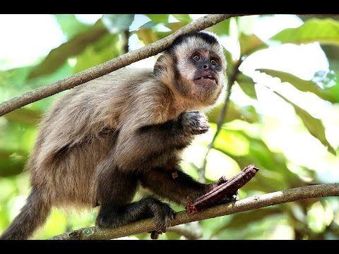 Amazônia Submersa - O Paraíso dos Animais