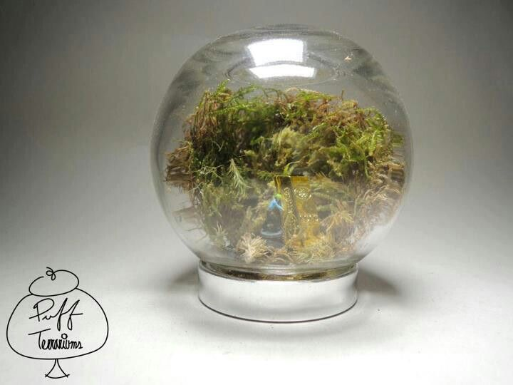 Gold Digger Terrarium Find us on Facebook :: puff terrariums #puff #terrarium #home #work #sky #decor #decoration #plant #cactus #garden #cat #puppy #wedding #centerpiece #green #moss #gift #DIY #crafts #art #cute  #jar #happy #bottle #yolo #lol #hkig