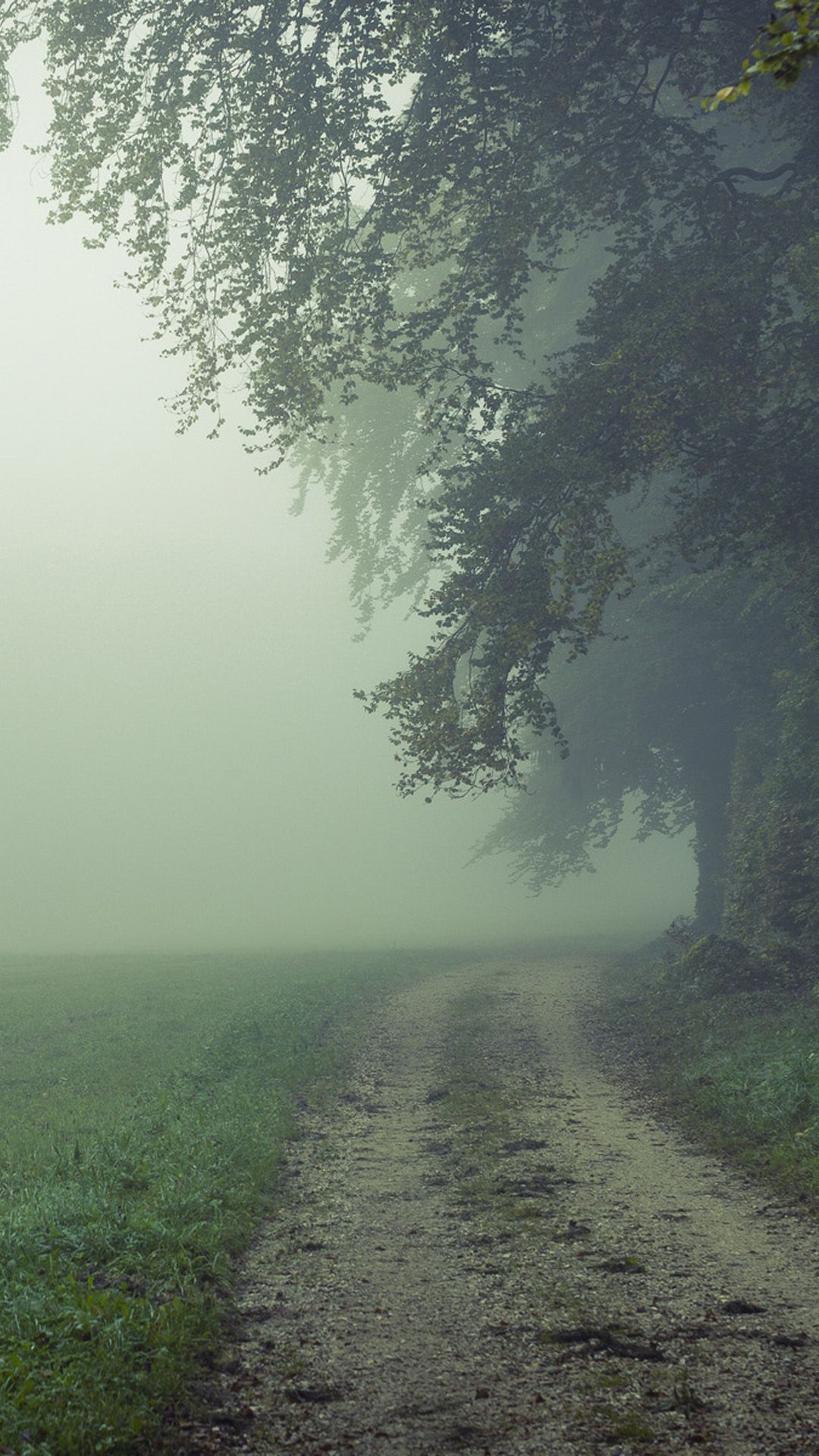 Country Misty Roads IPhone 6 Plus Wallpaper