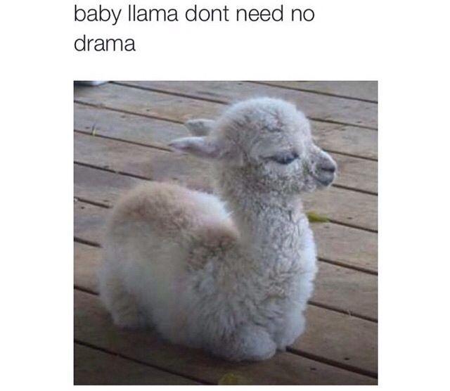 Llamas Quotes Inspirational: Top 30 Best Inspirational Quotes