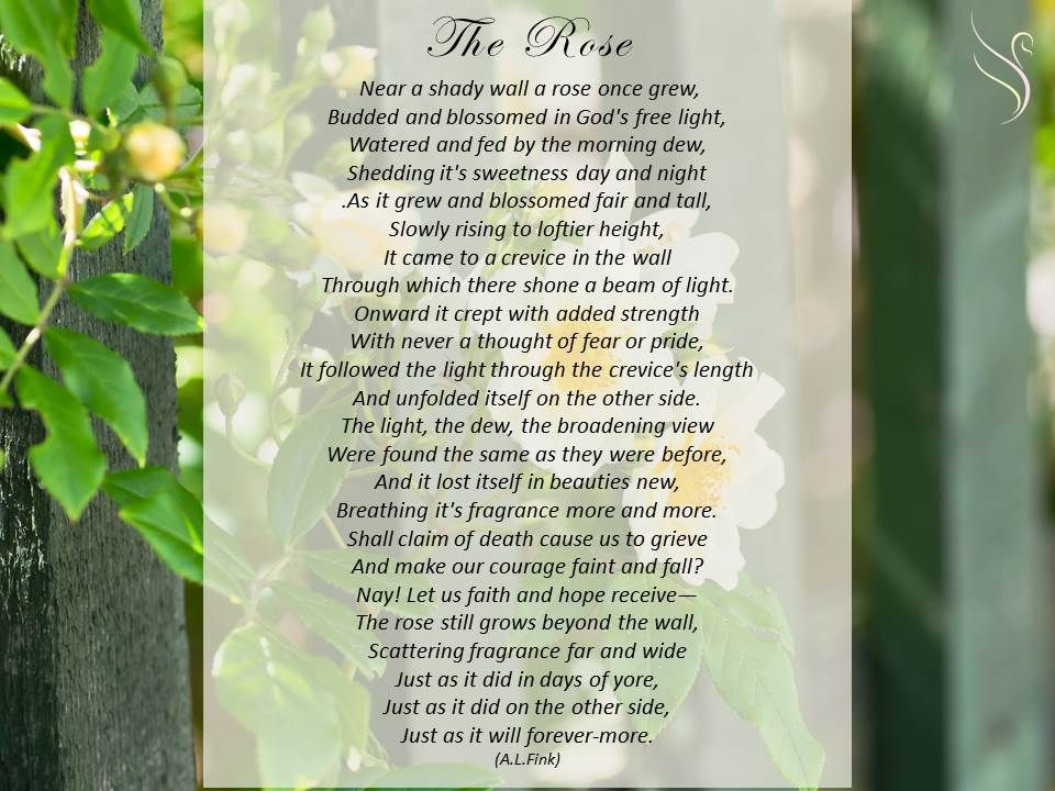 Funeral Poem Rose Funeral Poems Wall Poems