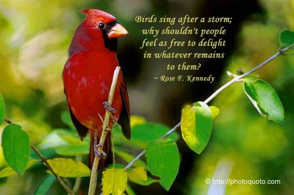 Funny Pictures Gallery Bird Quotes Sayings Bird Quotes And Sayings Temperate Deciduous Forest Deciduous Forest Animals Bird Quotes