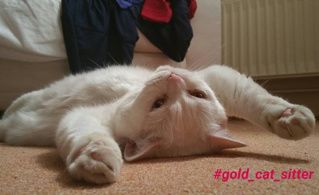 #gold_cat_sitter #catofinstagram #catlovers #catstagram #cat #cats #catsitting #katzenliebe #katze #katzen #hamburg #bkh #britishshorthaircat #catslife #lovemycat #catslover #catsofworld #catsitter #relax #instacat #loveyourcat #goldcatkatzenbetreuunghamburg by gold_cat_sitter
