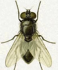 FLY CONTROL:  Fill zip lock bag with water & 5-6 pennies. Hang in the problem area, above door or window. Keeps flies & wasps away. Seems wasps/flies mistake bag for other insect nest & are threatened. Used by Amish, it works! Fly sees a reflection & won't come around. Research shows that the molecules of water makes its own prism effect & flies have a lot of eyes, It makes them dizzy. Flies are prey for many other bugs, etc. so they won't risk being around predators.