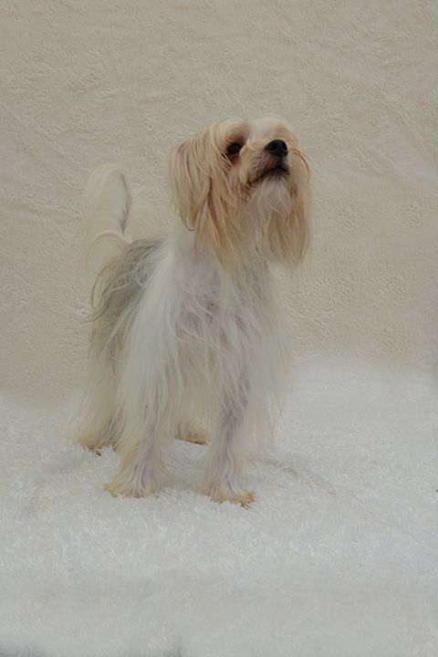 Adopt Holiday On Petfinder Terrier Mix Dogs Ormond Beach Lady Lake