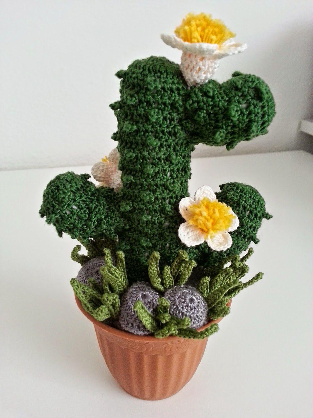 Pin Su Cactus Plants