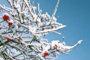 Die Beliebtesten Winterbluher Winter Blumen Bepflanzung Garten