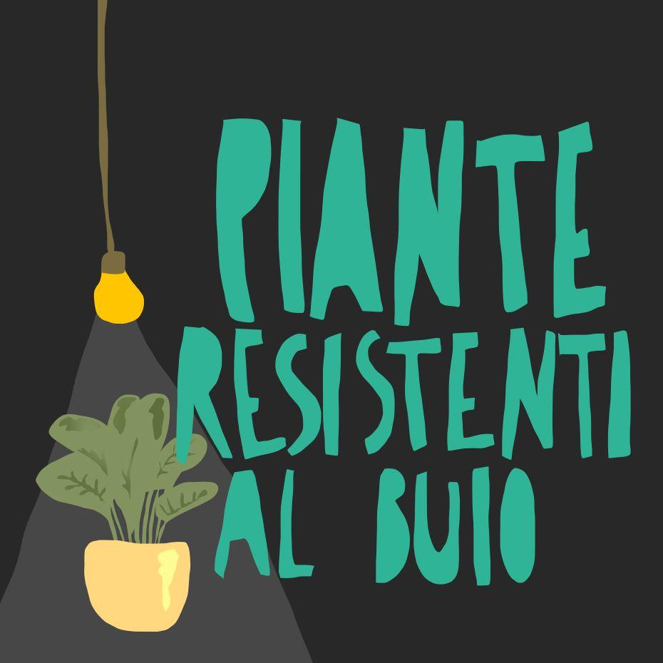 Piante Da Appartamento Ambiente Buio letture del weekend scopri le piante che vivono bene e sane