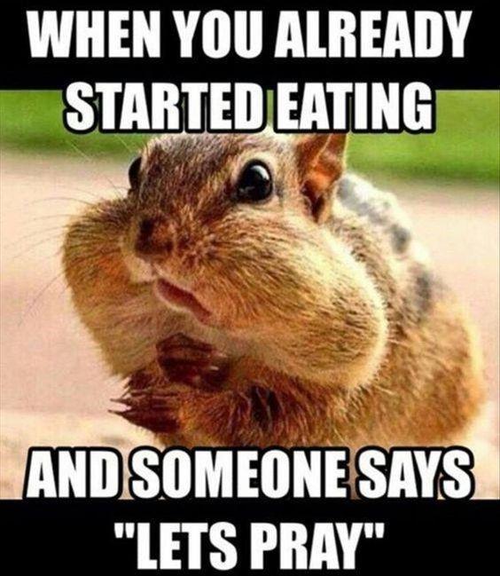 Cheek-Stuffing Nutty Squirrel Memes