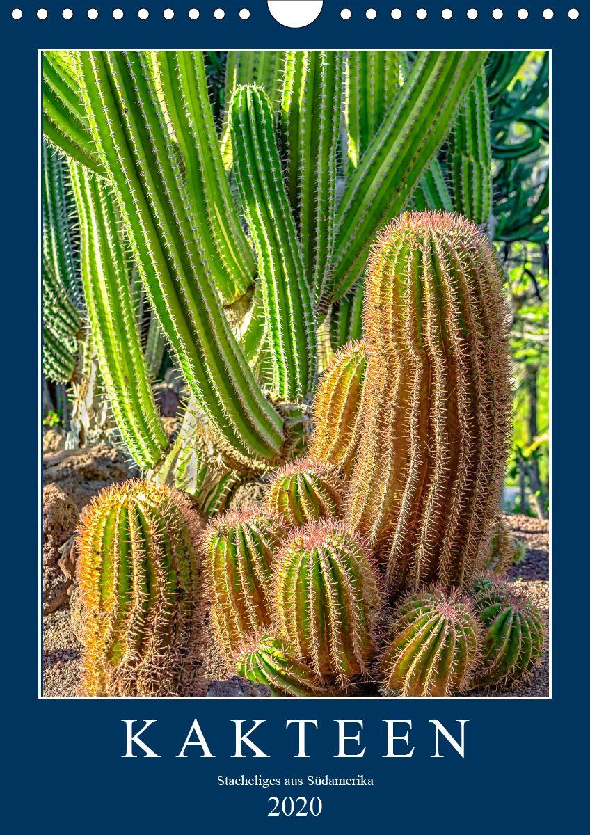Kalender Kakteen Stacheliges Aus Sudamerika Kaktus