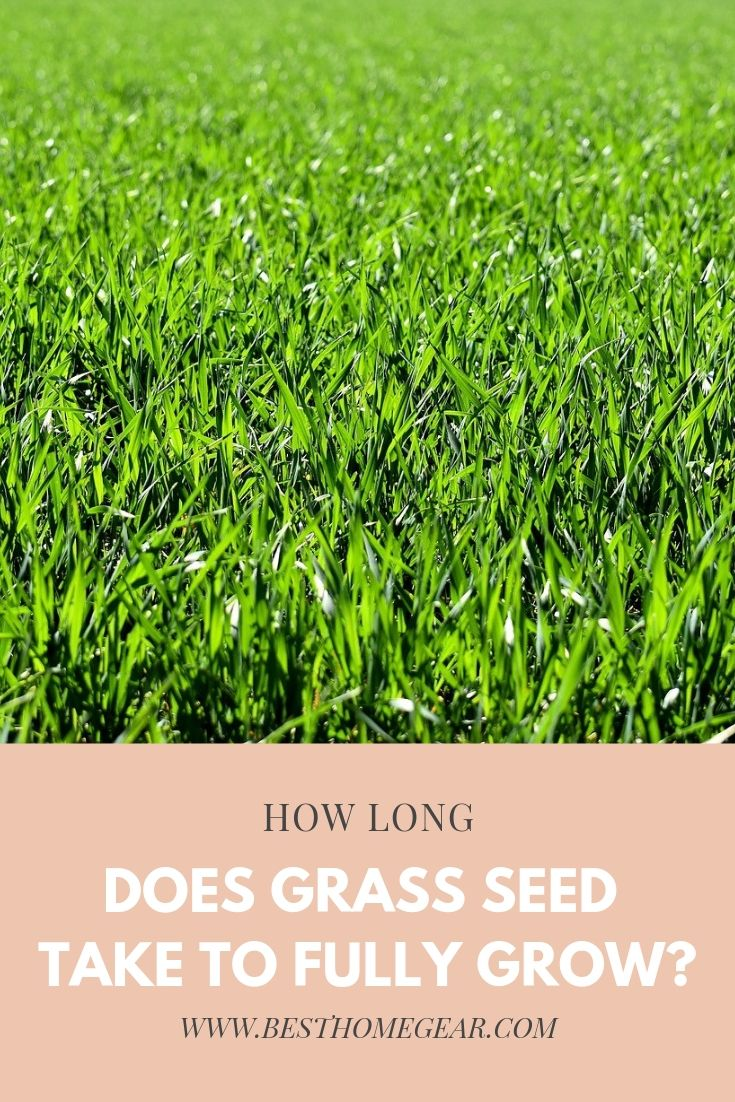 How Long Does Grass Seed Take to Fully Grow? | Grass seed ...