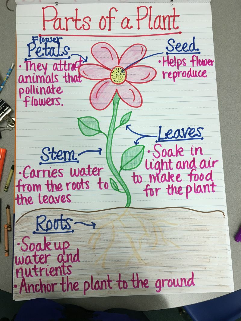22 Free Plant Life Cycle Activities That Grow The Learning Fun Teaching Plants Plants Anchor Charts Plants Life Cycle Activities [ 1067 x 800 Pixel ]