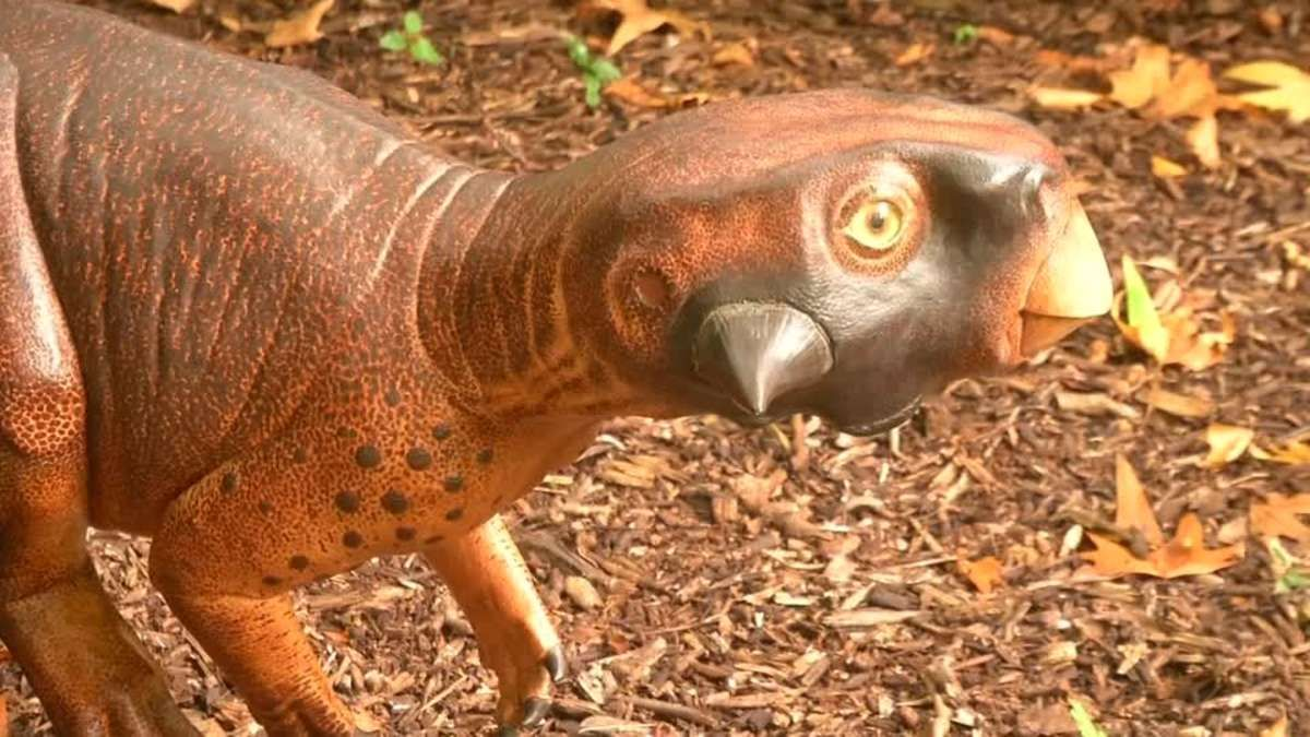 Scientists reconstruct the colour patterns of the pet-sized Psittacosaurus, producing what they believe is the most accurate 3D model of a dinosaur so far. Matthew Stock reports.