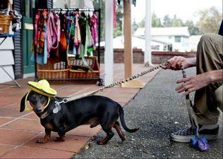Weiner Dog Weiner Dog Wiener Dog Puppy Face