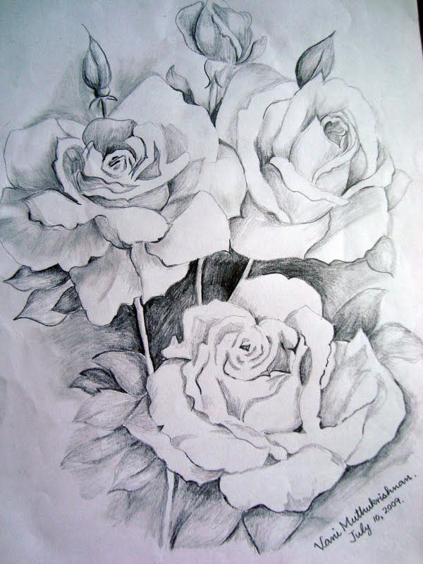 Flower Drawings Thanks To Graphite Pencil Drawings By Suzanne