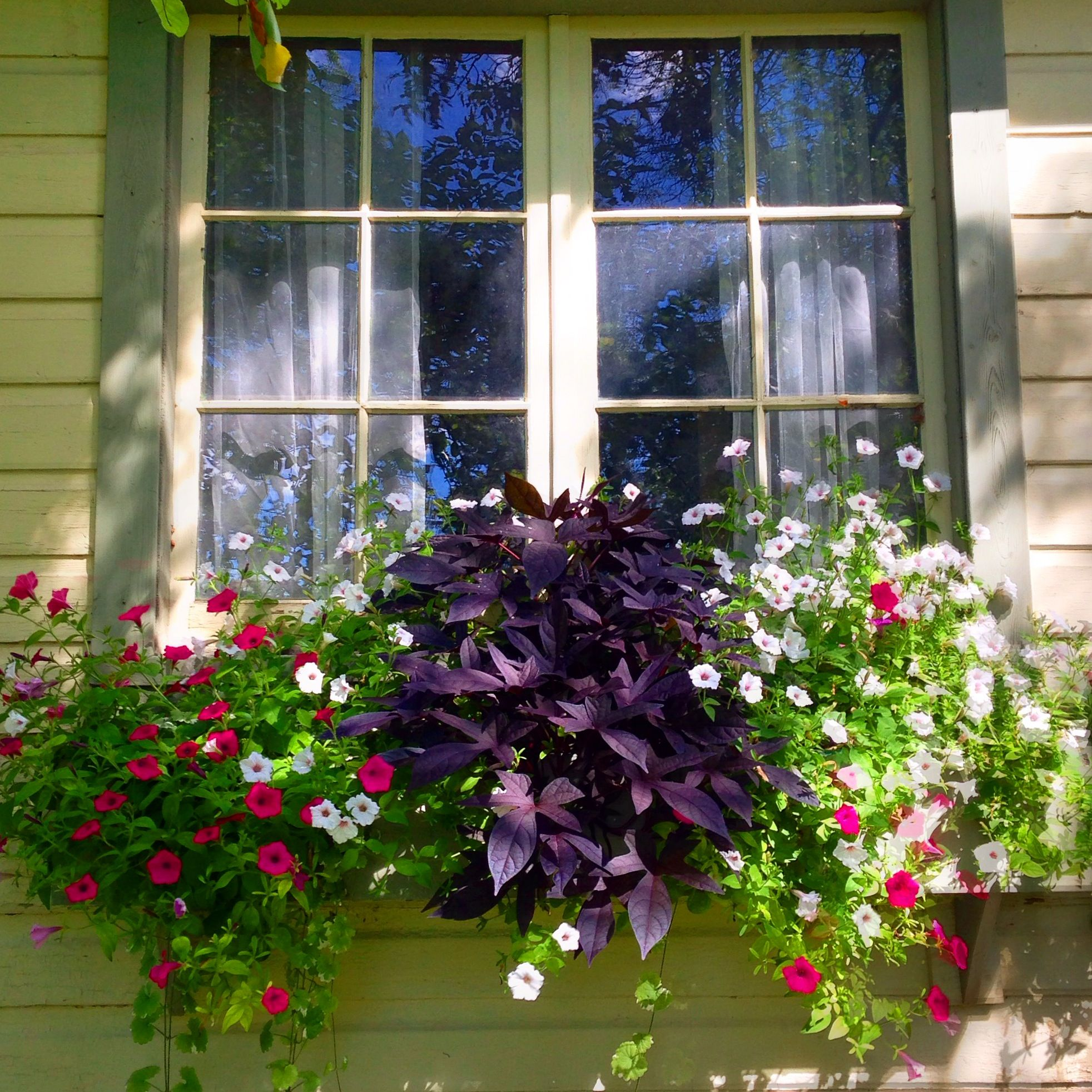 Window box ideas without flowers  cottage flower boxes  süleymanev için fikirler  pinterest  flower