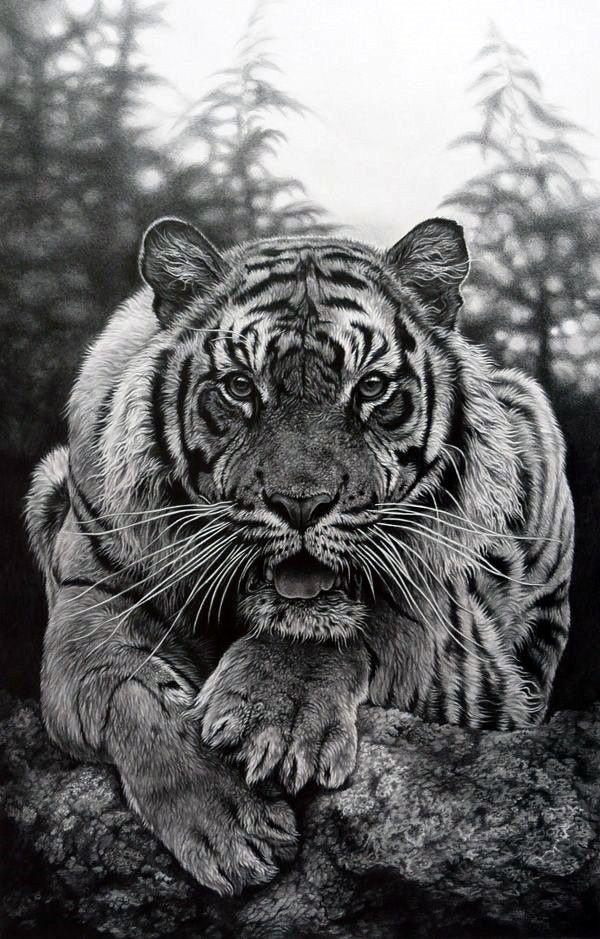 40 Realistic Animal Pencil Drawings | Animal Pencil Drawings Drawings And Animal