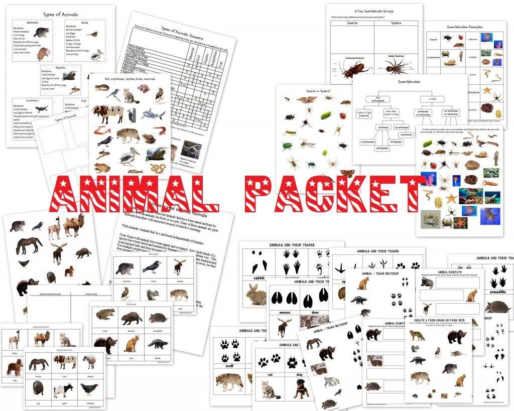 Worksheets Classifying Animals Worksheet animal characteristics worksheets classification 4 4