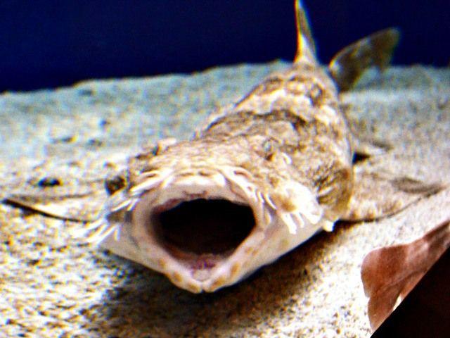 Wobbegong shark bite