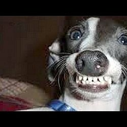 Dogs Making Funny Faces Funny And Cute Dog Compilation Make