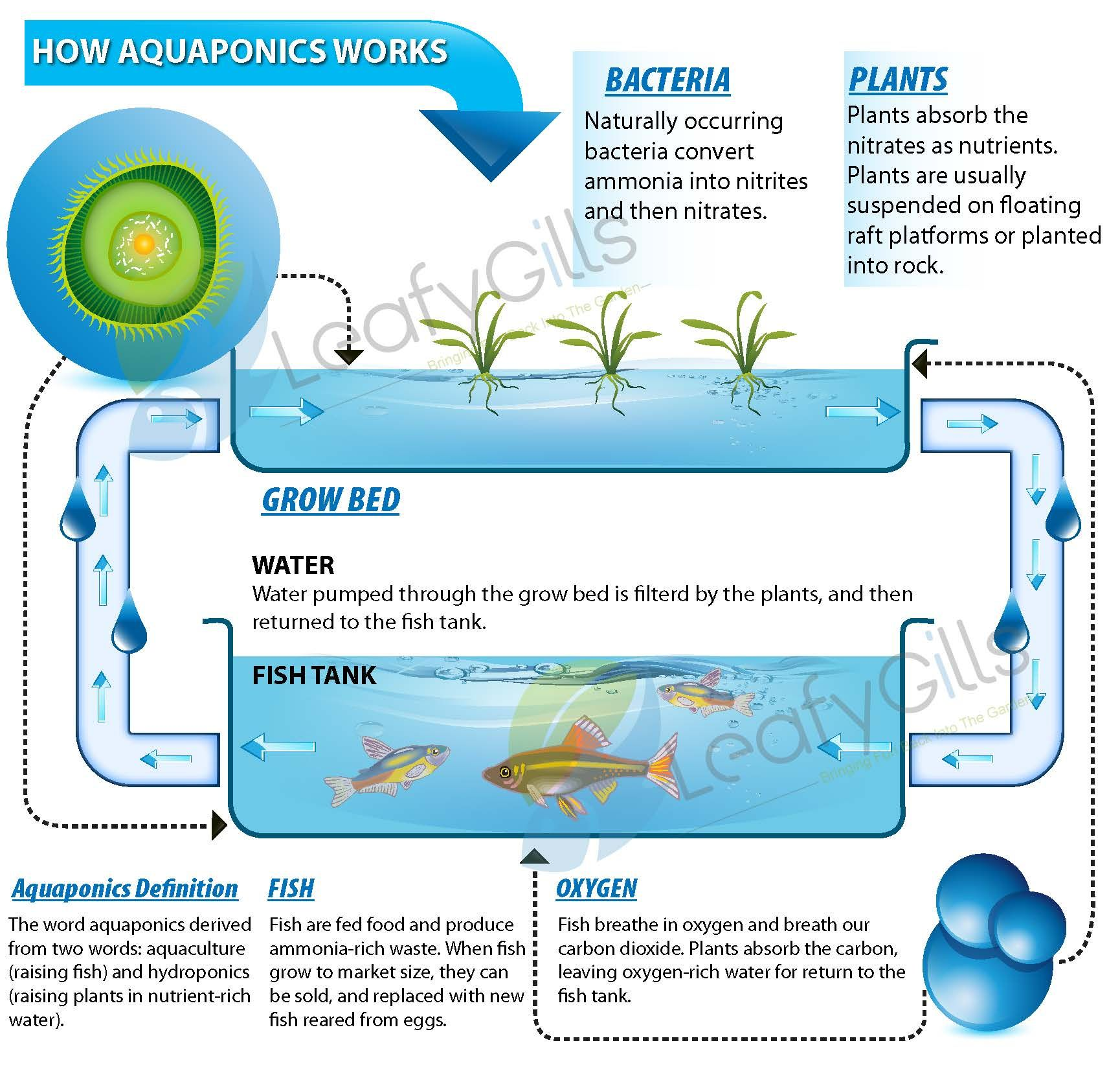 Aquaponics diagram 1730 1650 zagreb for Hydroponic system with fish