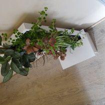 Mur végétal sur structure