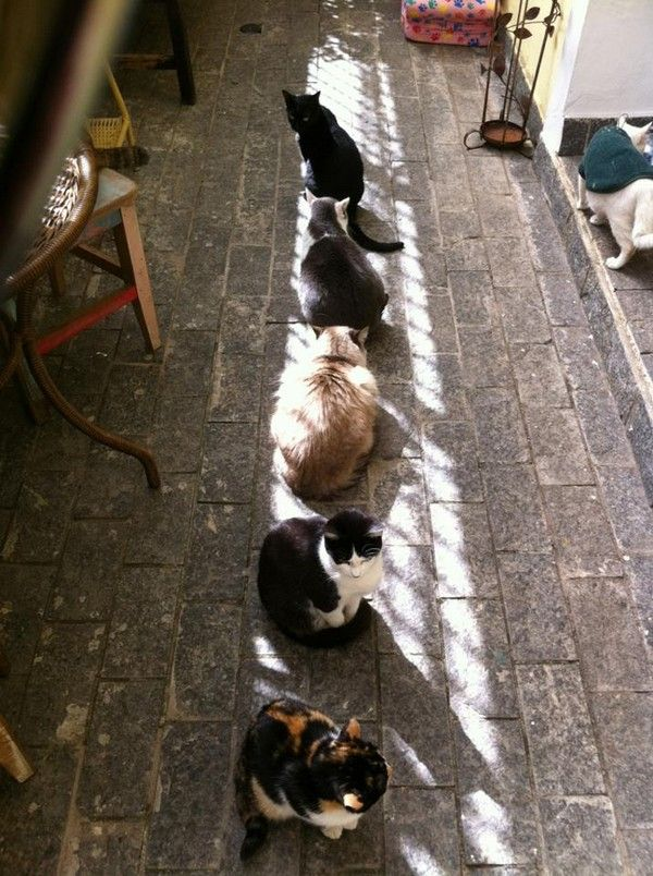 **** A band of sunshine and cats.