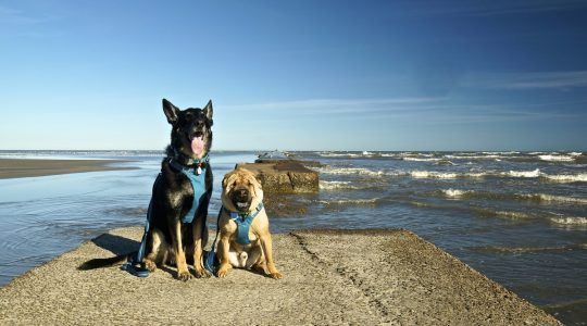 dog friendly beaches in texas