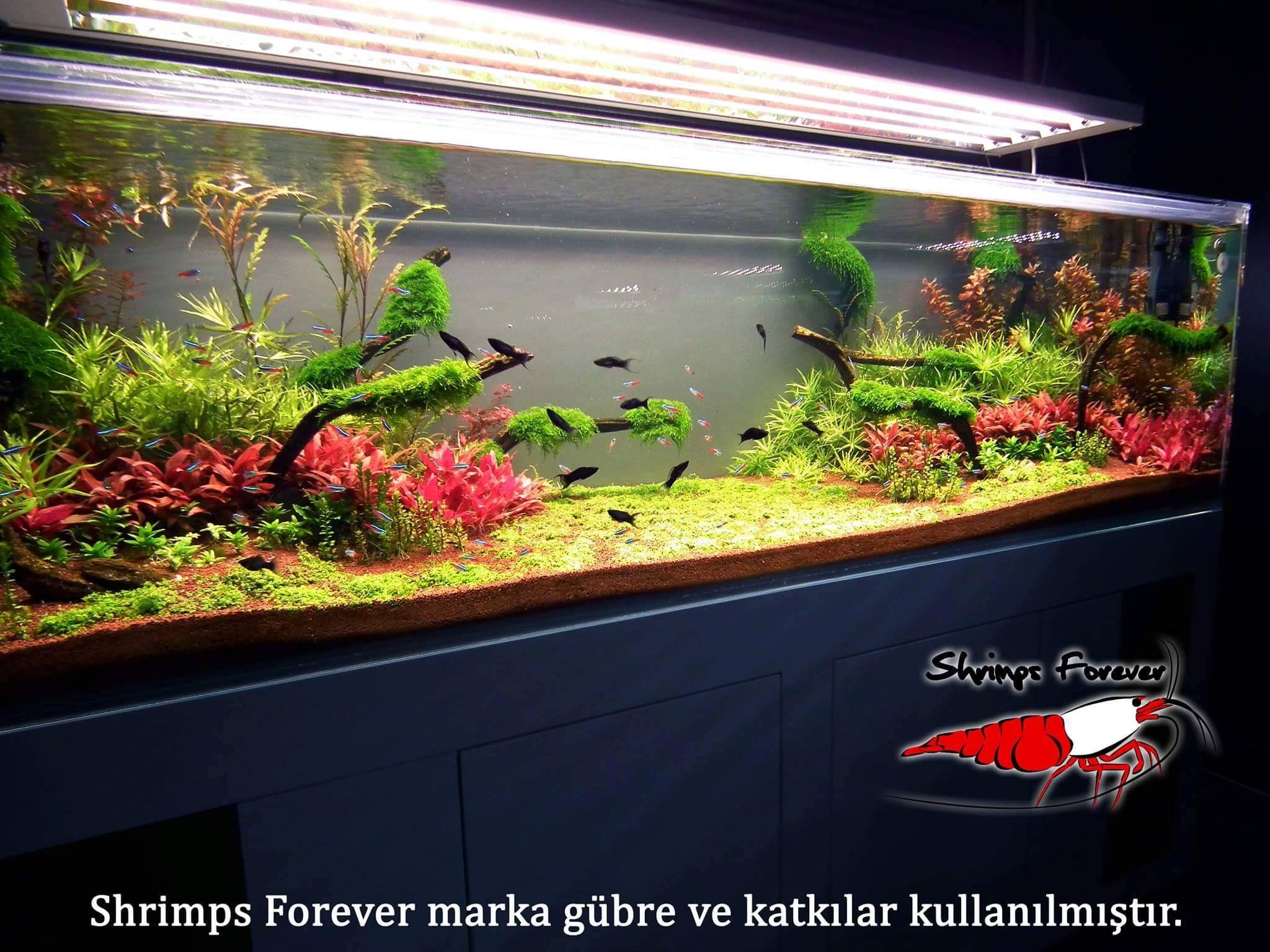 Wabi Kusa , Paludarıum , Aquascaping ,Terrarium Aquarıum Setup