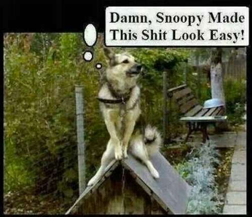 4edde9a0e70fd3769501ee450dfb5d19 snoopy, made this look easy, dog, dog house, meme funny 1,Doghouse Meme