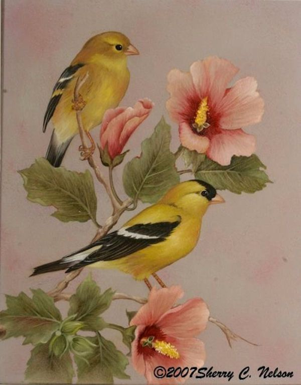 sn-american-goldfinch-with-rose-sm.jpg