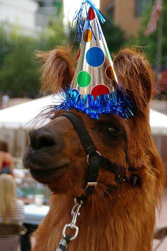 Party Hat Llama