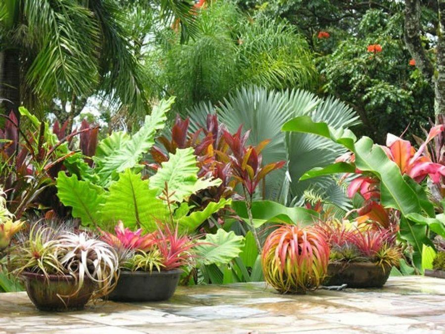 Recopilaci n de jardines tropicales tan bellos que for Diferentes jardines