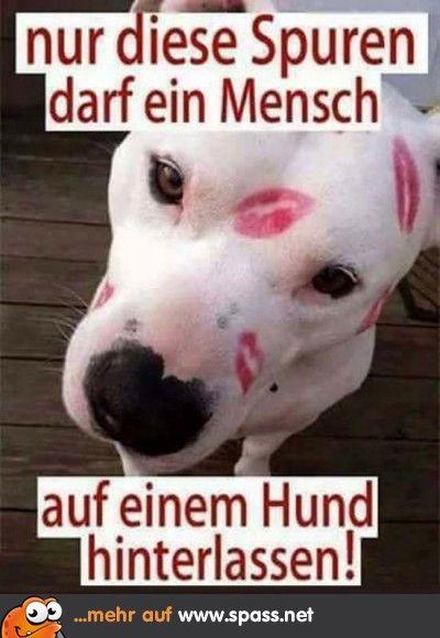 Tiere Lustige Bilder Auf Spass Net Tiere Lustige Bilder Hunde Lustige Hund Bilder
