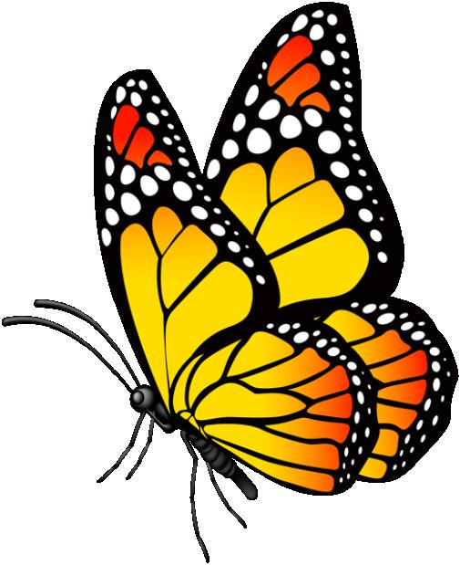 Animals Blog Animals Blog Butterfly Art Painting Butterfly Art Drawing Butterfly Painting