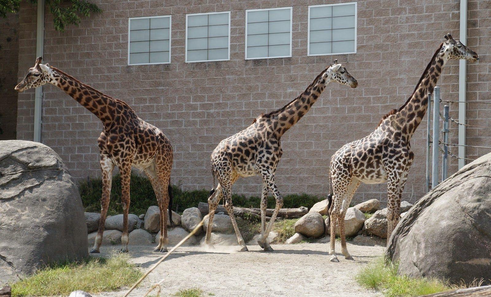 8/8/14 Roger Williams Zoo Alex and Ani Farmyard Farm
