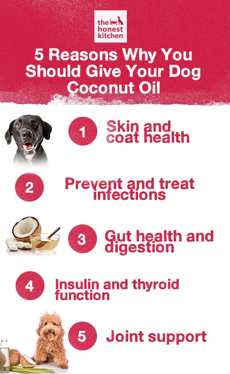 5 Reasons Why You Should Give Your Dog Coconut Oil ...